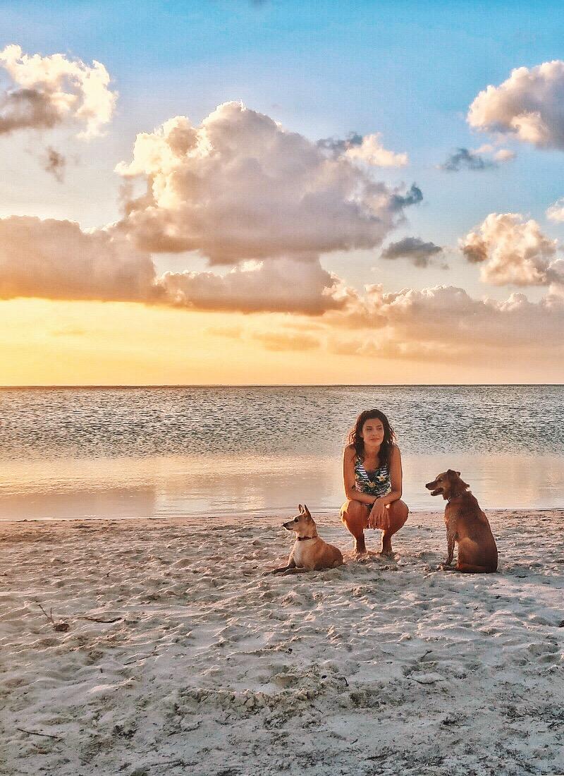 Viajar com Animais | Debbie Corrano