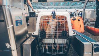 Caixa de Transporte para viajar com animais