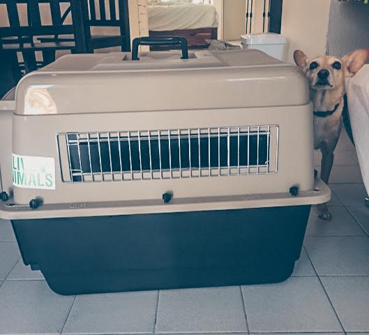 Caixa de Transporte | Viajar com Animais | Debbie Corrano (5 of 4)