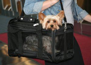 caixa de transporte | viajar com animais