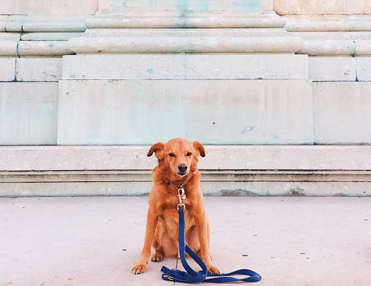 Viajar com Animais | Levar animais para a Europa