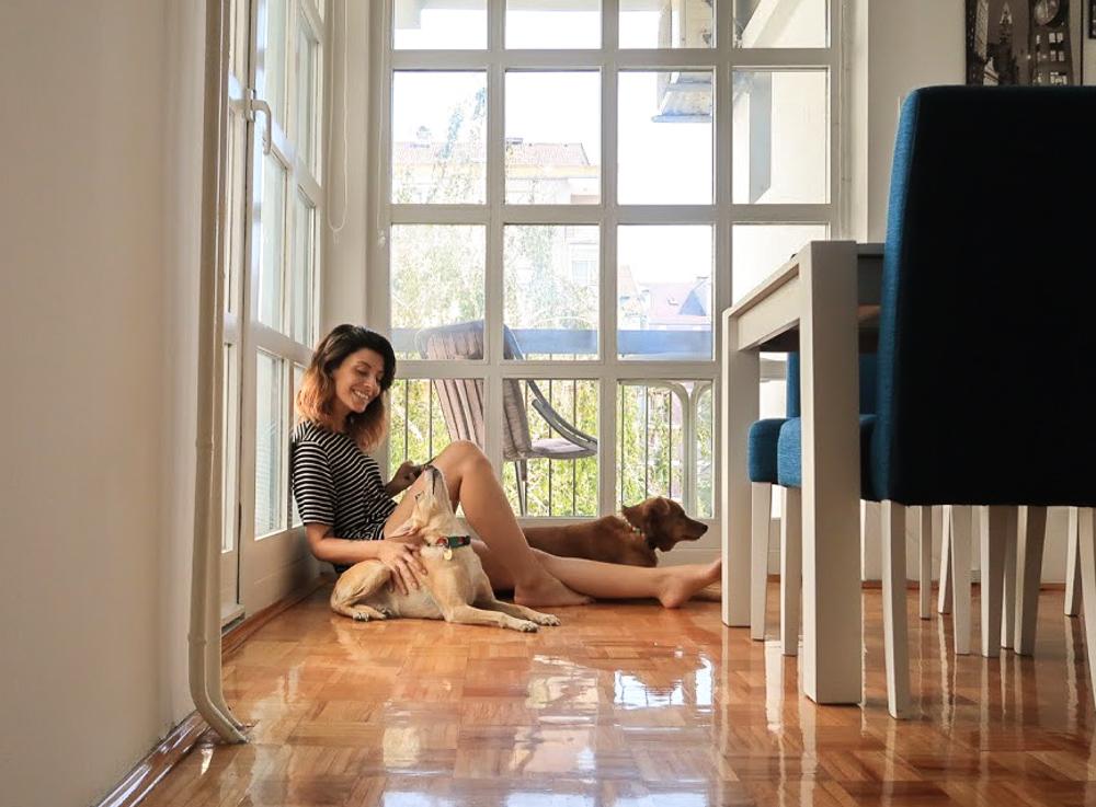 Tem Na Web - Como encontrar um hotel que aceita cachorros?
