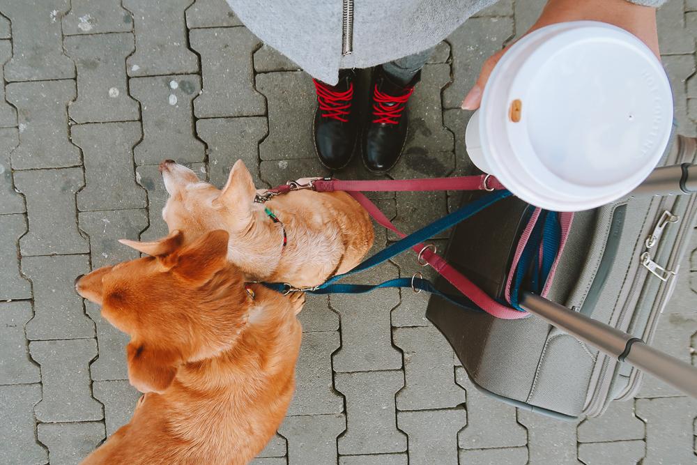 Tem Na Web - Vale a pena levar meu cachorro para viajar?